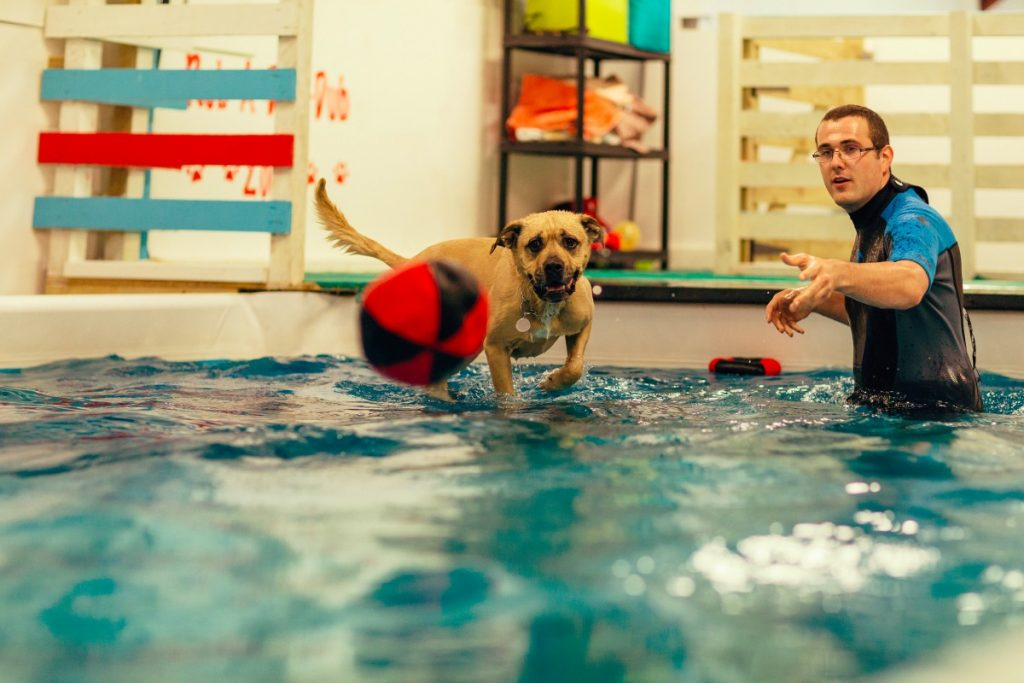 suffolk_canine_creche_pool