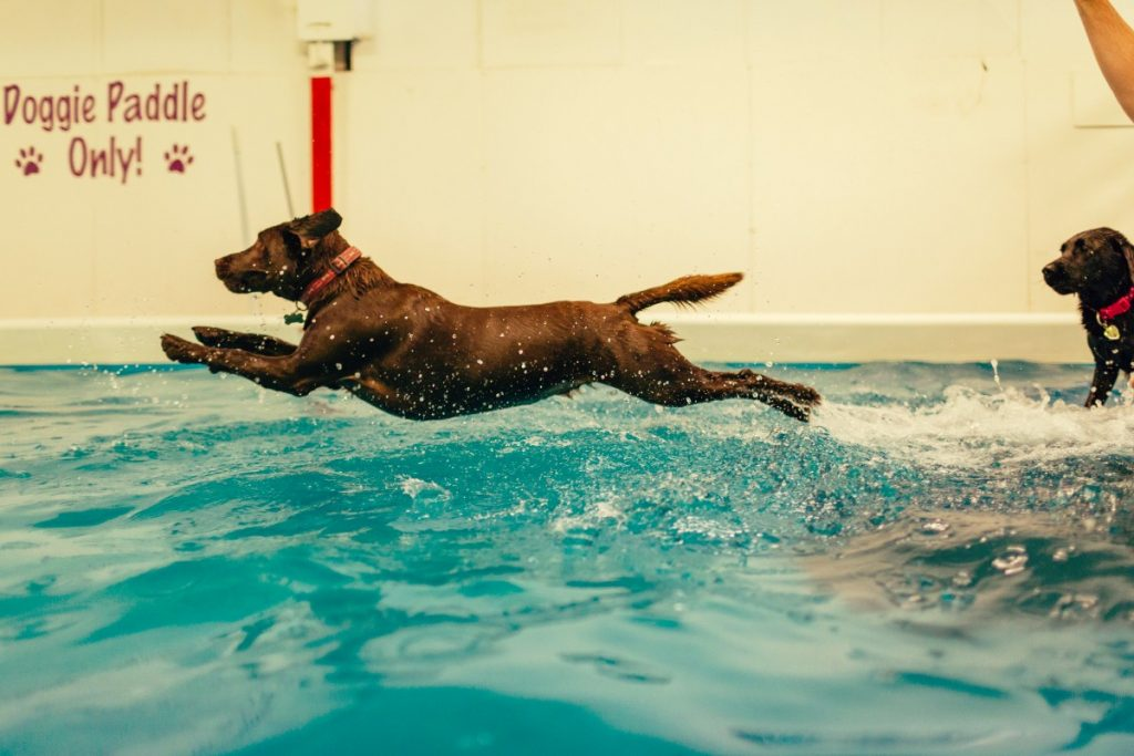 suffolk_canine_creche_pool1
