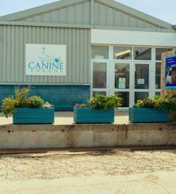 suffolk_canine_creche_day_care7