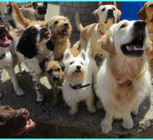 suffolk_canine_creche_day_creche