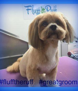suffolk_canine_creche_fluff_the_ruff3