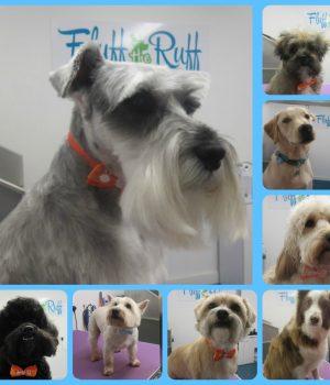 suffolk_canine_creche_fluff_the_ruff7