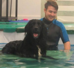 suffolk_canine_creche_pool12