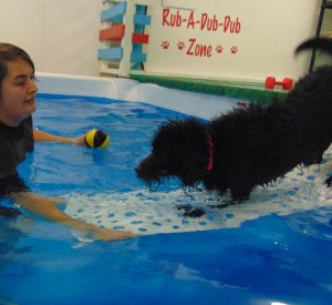 suffolk_canine_creche_pool19