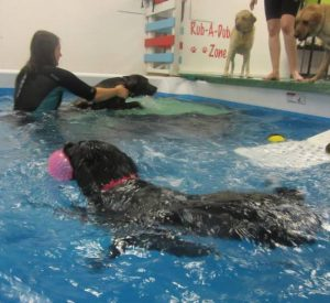 suffolk_canine_creche_pool6