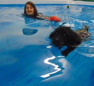 suffolk_canine_creche_pool8