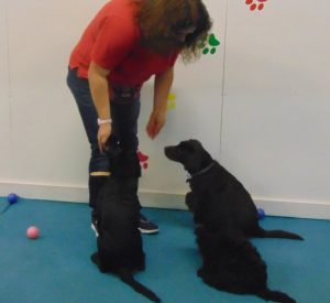 suffolk_canine_creche_puppy_party1