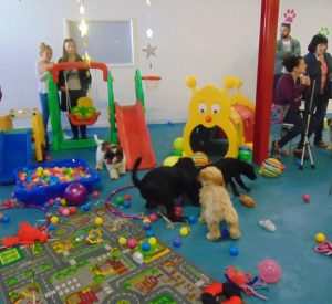suffolk_canine_creche_puppy_party3