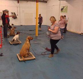 rehab dogs